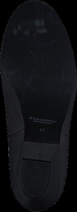 Gardenia - 1312700
