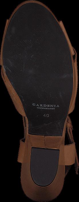 Gardenia - 1312021
