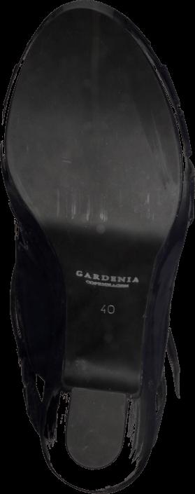 Gardenia - 1312027