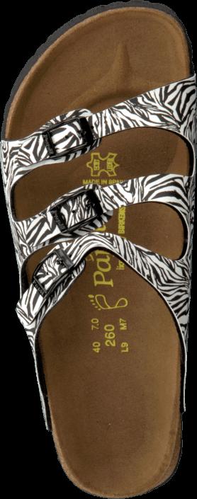 Papillio - Florida Regular Zebra