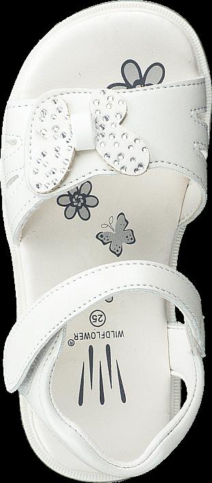 Wildflower - Kolvereid White